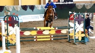 Download Show jumping competition for young horses Video