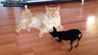 Download Funny Cat Videos (30+ Minutes) Video
