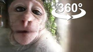 Download Wild Monkey, FUN, VR 360 video Video