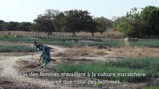 Download Agriculture familiale : améliorer des moyens d'existence par l'agriculture en Gambie Video