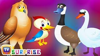 Download Surprise Eggs Wildlife Toys | Birdwatching in Wildlife & Birds Sounds | ChuChu TV Surprise For Kids Video