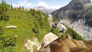Download Flying eagle point of view #1 Video