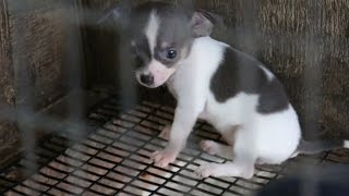 Download Rescued Puppy Mill Dogs Get a Second Chance Video