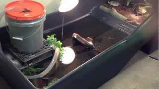 Download The Turtle Room - Pacific Pond Turtles (Actinemys marmorata) Arrival Video