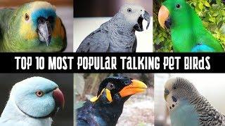 Download Top 10 Most Popular talking pet Birds | Talking Parrots Video