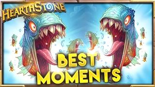 Download Best Moments 84 | Hearthstone Gadgetzan Video