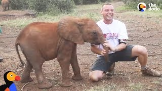 Download Baby Elephant ATTACKS Man | The Dodo Video
