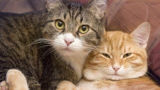 Download You Should Get A Second Cat Video