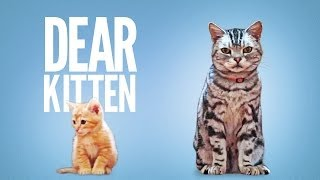 Download Dear Kitten Video
