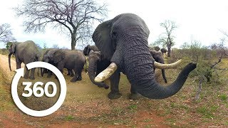 Download Elephants on the Brink | Racing Extinction (360 Video) Video