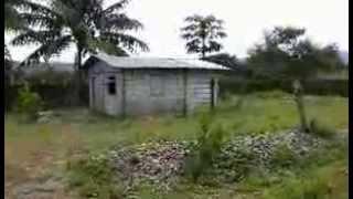 Download Pig Farm Nueva Ecija Philippines Video