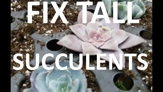 Download How to Fix Leggy Succulents after winter! Video