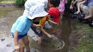 Download Rice planting at Roppongi Hills [RAW VIDEO] Video