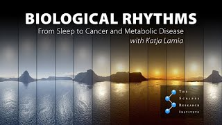 Download Saturday Science at Scripps Research: Biological Rhythms:From Sleep to Cancer and Metabolic Disease Video