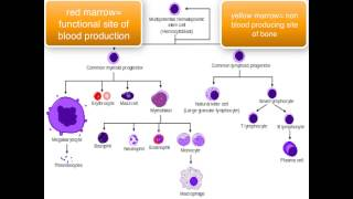Download Immunology - introduction Video