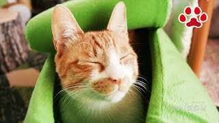 Download 8匹が住む猫部屋の朝 3月【瀬戸の猫部屋日記】The morning of the 8 cats room March Video