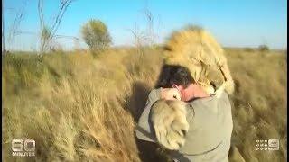 Download Lion Man - Kevin Richardson: ″The Lion Whisperer″ on 60 Minutes (2014) Video