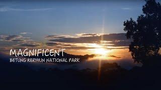 Download Magnificent Betung Kerihun National Park Video