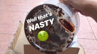 Download Unboxing a BUNCH of COCKROACHES !!! (Gone NASTY) Video