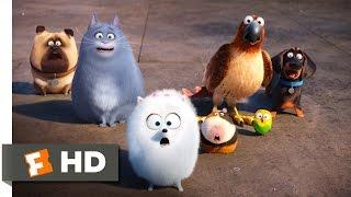 Download The Secret Life of Pets - Secret Route Scene (4/10) | Movieclips Video