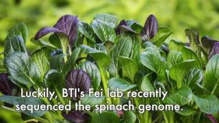 Download BTI science in seconds: Stronger spinach Video