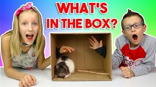 Download What's in the BOX Challenge!!!!!! Video