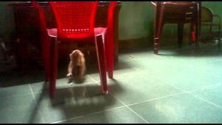 Download bán khỉ con dễ thương cho tuổi teen 01648395336 Video