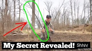 Download WILLOW TREES For BIG BUCKS!? (MUST SEE) Video