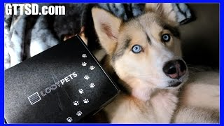 Download HUSKIES TRY OUT OF THIS WORLD TREATS | Loot Pets Unboxing #LootPets Video