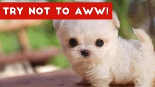 Download Try Not to AWW! at These Cute and Funny Animals | Funny Pet Videos Video