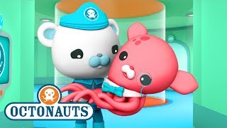 Download Octonauts - Close Encounters | Ocean Adventures | Cartoons for Kids | Underwater Sea Education Video