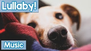 Download Lullabies for Dogs to Sleep to! Calm Your Dog and Help them Have a Sound Sleep with this Music! Video