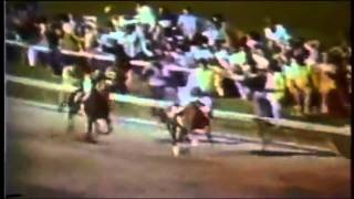 Download Secretariat: The Triple Crown Experience Video