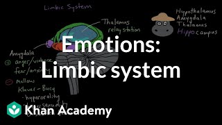 Download Emotions: limbic system | Processing the Environment | MCAT | Khan Academy Video