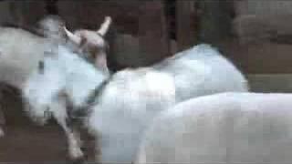 Download Disneyland Petting Zoo Video