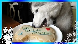 Download HOW TO MAKE A DOG BIRTHDAY CAKE Easy Recipe DIY | Snacks with the Snow Dogs 31 Video