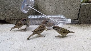 Download Water bottle bird trap Video