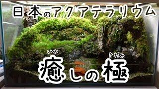 Download 日本のアクアテラリウム 「これまでと、これから‥‥」 Video