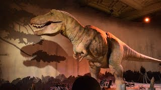Download National History Museum Tour - London Video