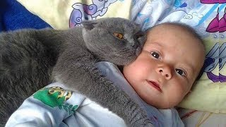 Download MOST Crazy Cats Annoying Babies, If You Laugh You Lose Challenge, Funny Cats Videos by Animals TV Video