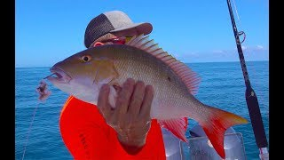 Download WHOLE SNAPPER {Catch Clean Cook} Island style Tasty Tuesday Video
