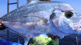 Download Gomoku Slow Jigging (South East Asia style!) - Part 1 Video