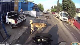 Download ANGRY DOGS vs BIKERS & DOGS ATTACKING MOTORCYCLE   BAD DOGS [Ep #05] 🌟 BEST Compilation 2017 Video