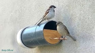 Download Bird house - How To Build A DIY Birdhouse Using PVC Pipe Video