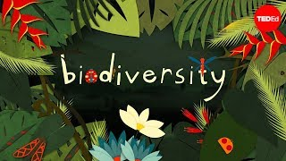 Download Why is biodiversity so important? - Kim Preshoff Video