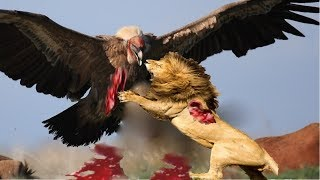 Download Live: TOP 100 The most Amazing Attacks Of Wild Animals Eagle,lion,Crocodile, buffalo, elephant..Etc Video
