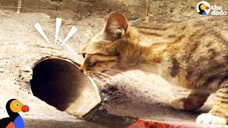 Download Cat Mom Waits For Rescuers To Save Her Kitten | The Dodo Video