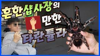 Download 흔한 파충류샵 사장의 쇼핑. 손바닥만한 타란튤라들 등장 Video