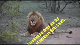 Download Kings of Northern Sabi Sands: Birmingham Boys Video