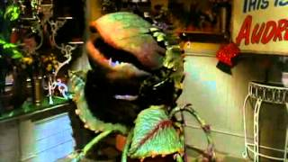 Download Little Shop of Horrors - Feed Me Video